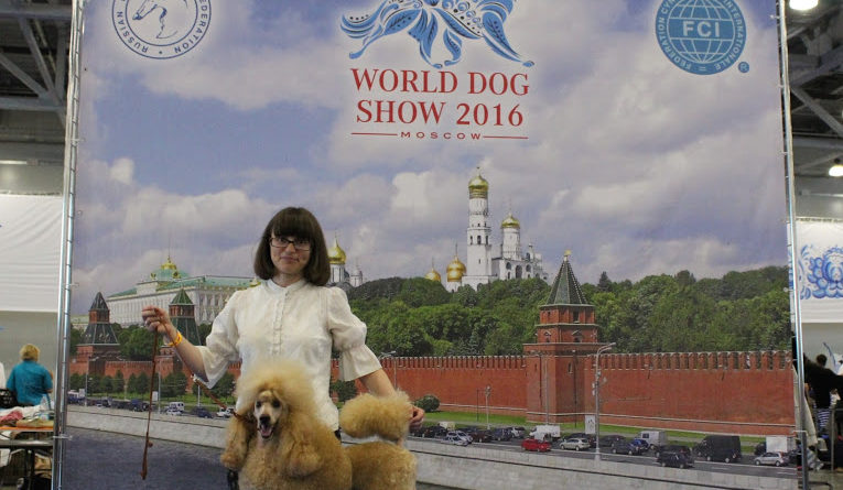 Пудели фото 10 2016-06-25 и 26 World Dog Show Moscow.