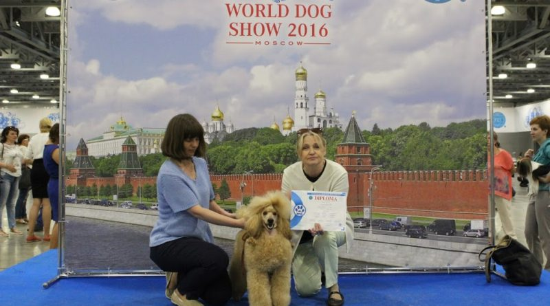 Пудели фото 18 2016-06-25 и 26 World Dog Show Moscow.