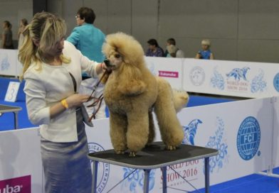 2016-06-25 и 26 World Dog Show Moscow