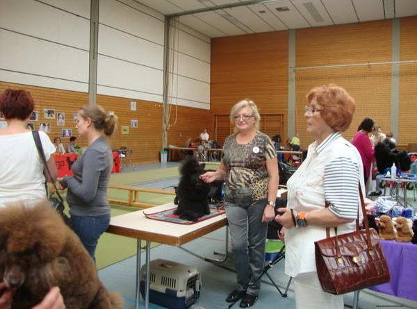 Пудели фото 27 2012-09-09 Юбилейная выставка 60 лет VDP в г. Баден-Баден Германия.