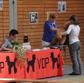 Пудели фото 35 2012-09-09 Юбилейная выставка 60 лет VDP в г. Баден-Баден Германия.
