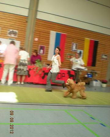 Пудели фото 36 2012-09-09 Юбилейная выставка 60 лет VDP в г. Баден-Баден Германия.