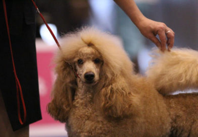 2013-09-01 European Dog Show, Geneve