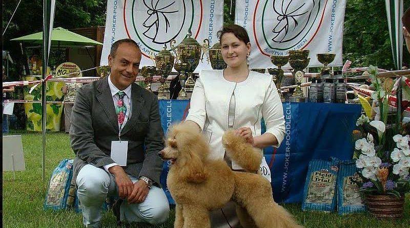 Пудели фото 3 2013-05-18 World Dog Show Budapest Hungary.