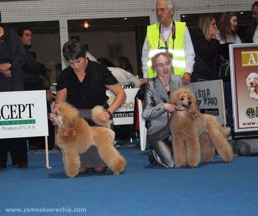 Пудели фото 4 2009-10-10 World Dog Show Bratislava Slovakia.
