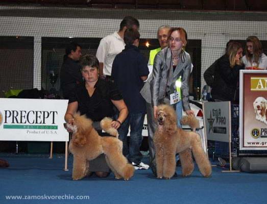 Пудели фото 6 2009-10-10 World Dog Show Bratislava Slovakia.