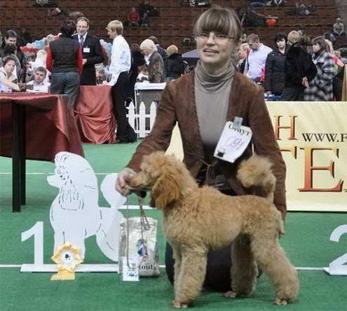 2011 год спец выставка собак