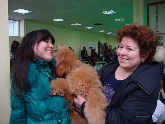 2012 год выставка собак норд и профессионал
