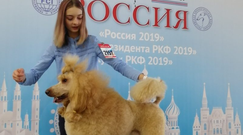 Пудели фото 3 РОССИЯ-2019, Дон Амиго'c.