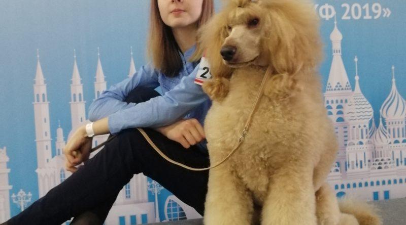 Пудели фото 5 РОССИЯ-2019, Дон Амиго'c.