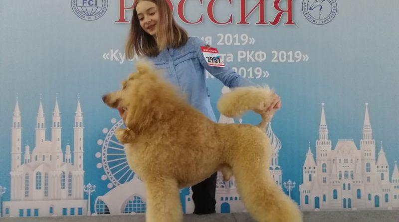 Пудели фото 7 РОССИЯ-2019, Дон Амиго'c.